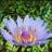 Botanicals/Herbs