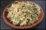 Eucalyptus leaf (Eucalyptus globulus)